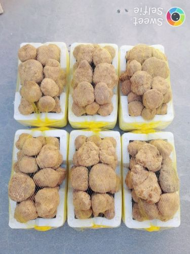 faga3 from  algaraya and libiya