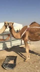 خلفه عمانيه