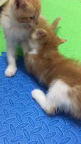 3قطط صغيرة