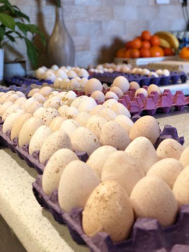 بيض رومي
