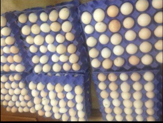 بيض بلدي