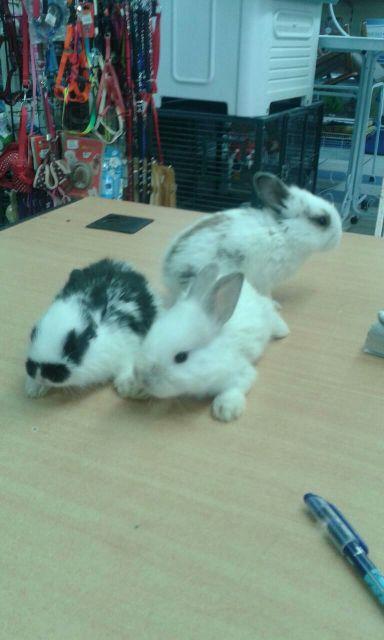مطلوب ٣ ارنب