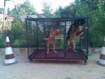 منازل حيوانات