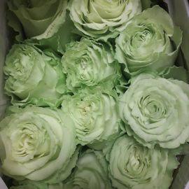الوردة الخضراء