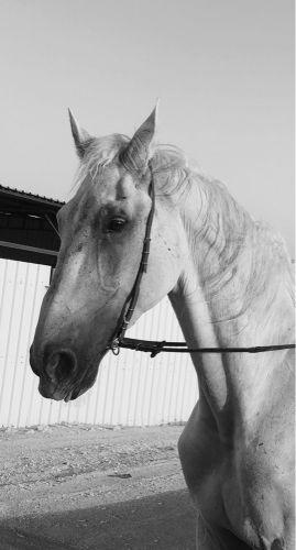 حصان قفز