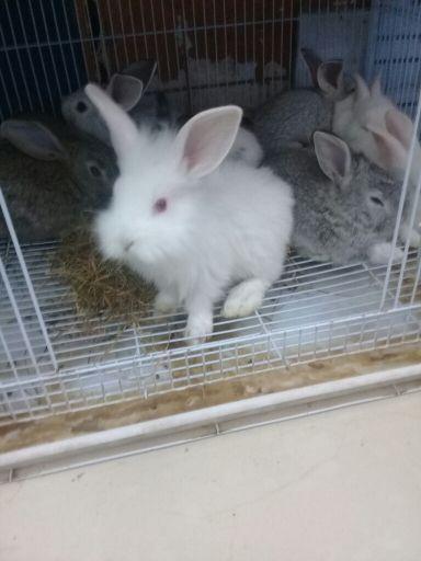 ارنب صغير