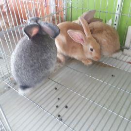 ارنب وسط