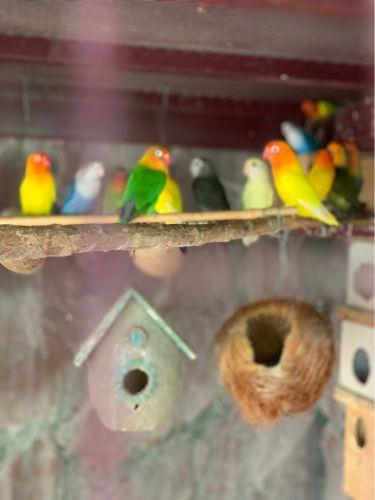 للبيع طيور زينة متنوعة