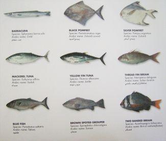 للمستثمرين في مجال الاسماك