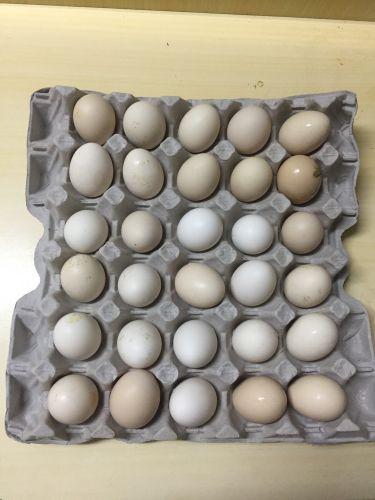 بيض بلدي للاكل