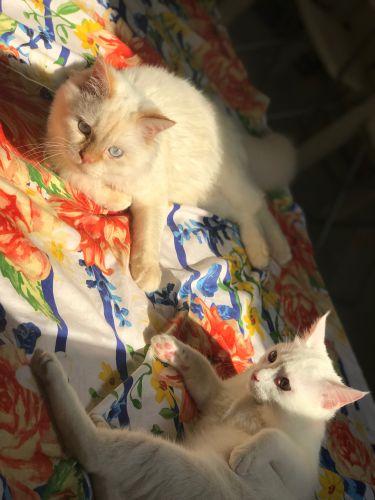 2 قطط