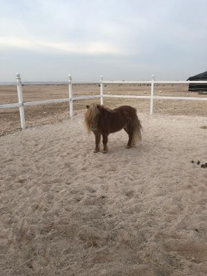 pony hours for sale