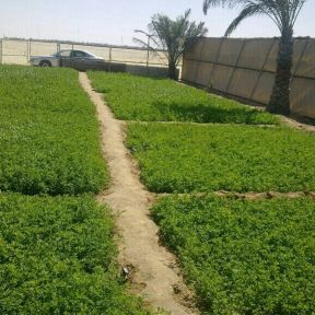 زراعة مزارع
