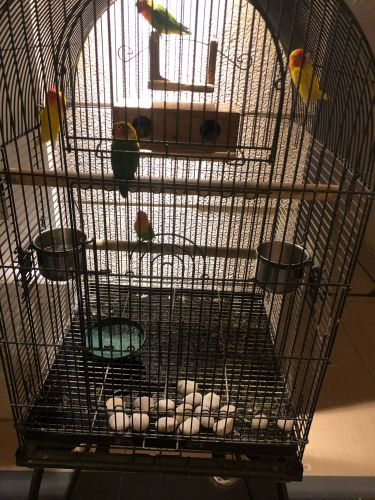 قفص مع الطيور