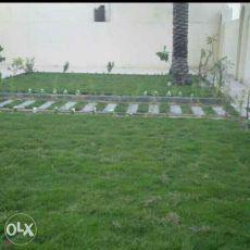 ممرات عشب وديكور