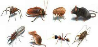 مكافحة الحشرات الصراصير الفئران نهائي
