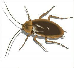 رش الصراصير الفئران وجميع الحشرات
