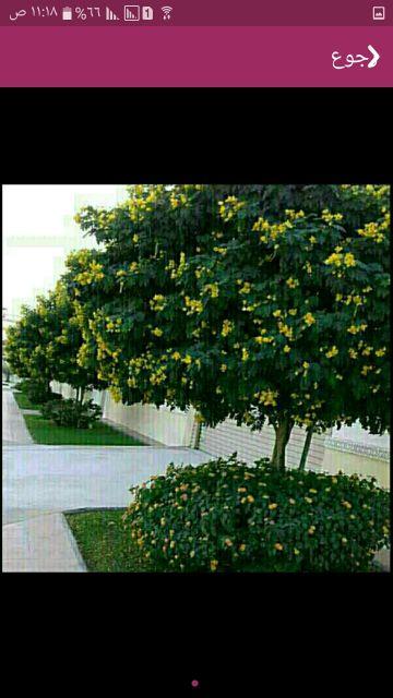 زراعه الاشجار والورود والنباتات