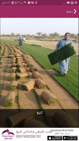 عشب ورود أشجار نخيل للبيع زراعة الحدائق