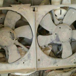 maxima fan