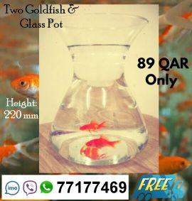 2 Goldfish & Glass Pot