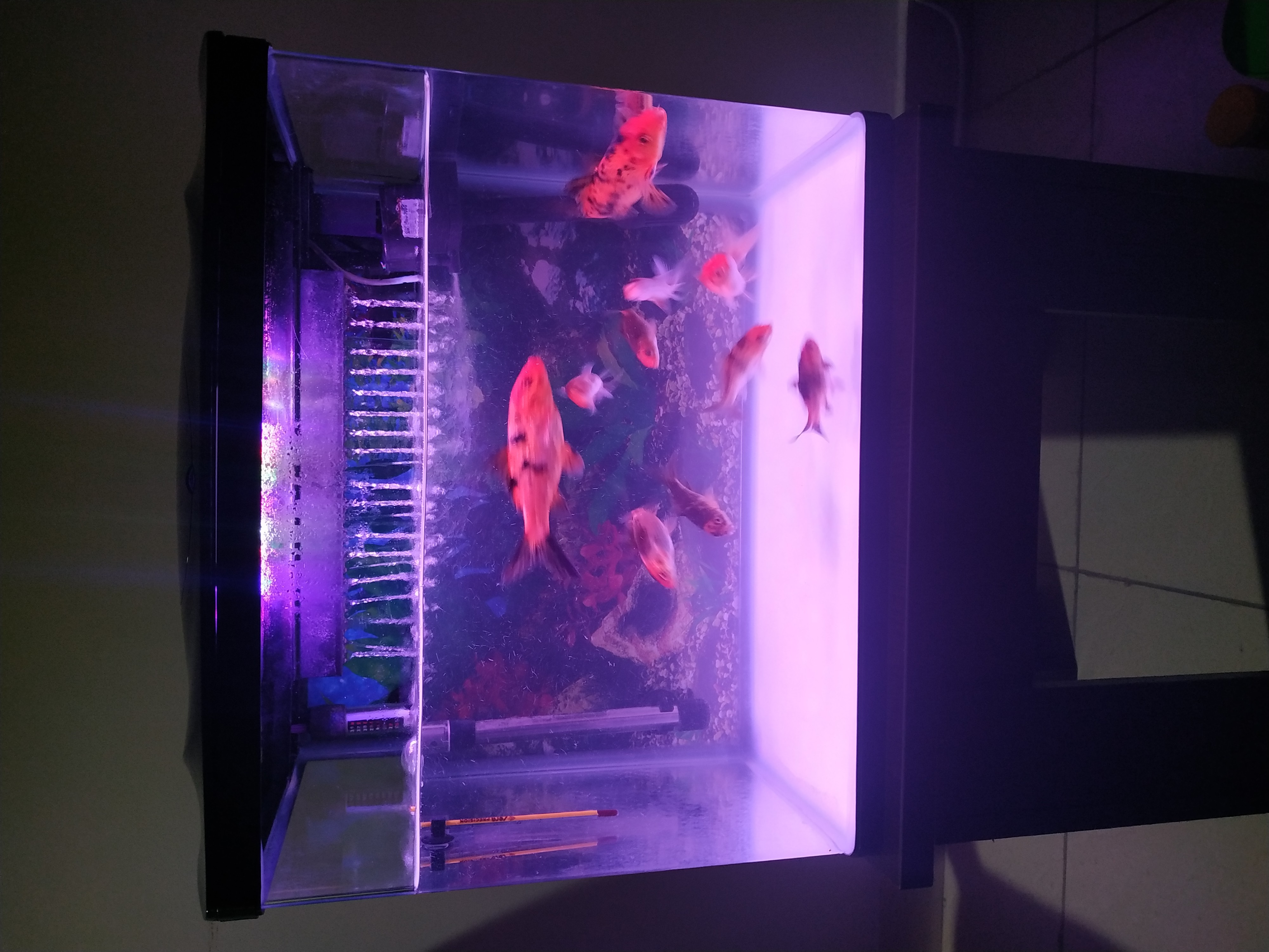 Fish tank for sale with fishes