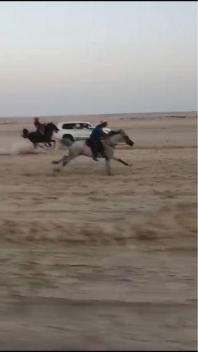حصانين ريس
