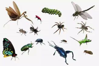 شركة بيورمنت لمكافحة الحشرات