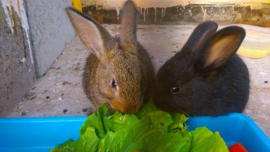 2 ارنب صغير